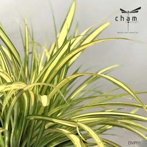 cay-xanh-trang-tri-decor-concept-DVP01